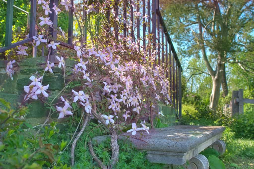Pink flowers and stone bench